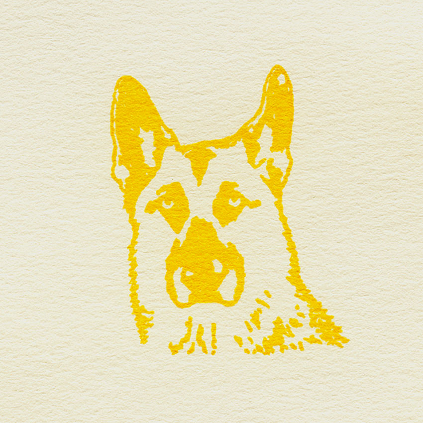Cody; yellow; on white; 030613